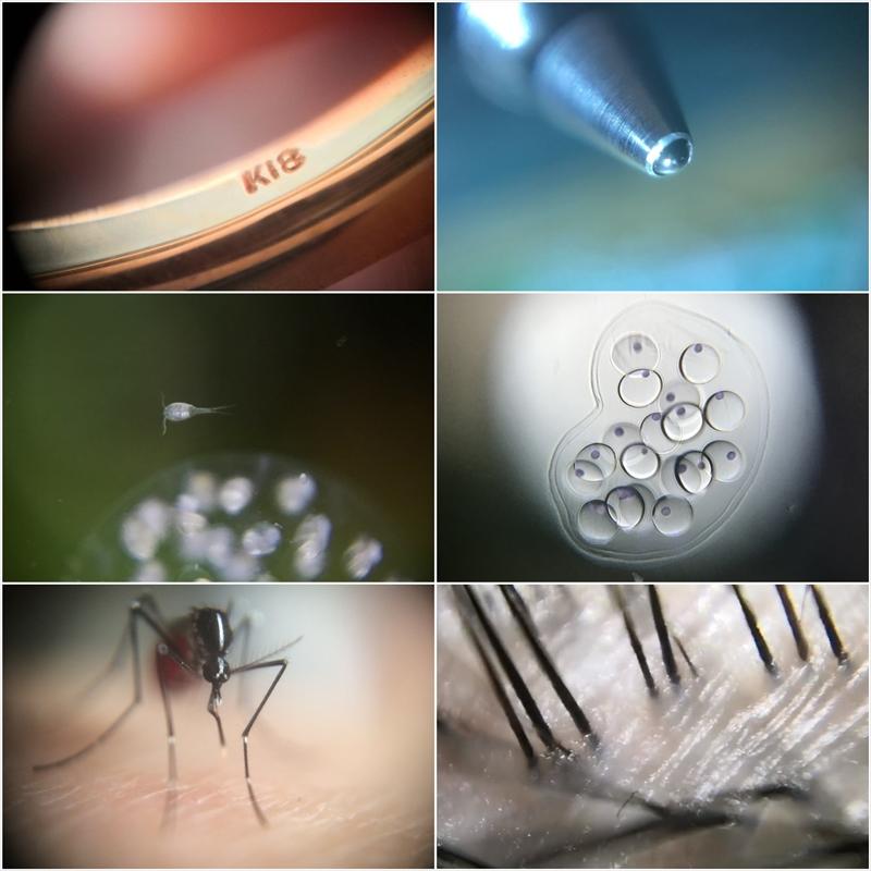 スマホ用顕微鏡レンズで撮影した写真
