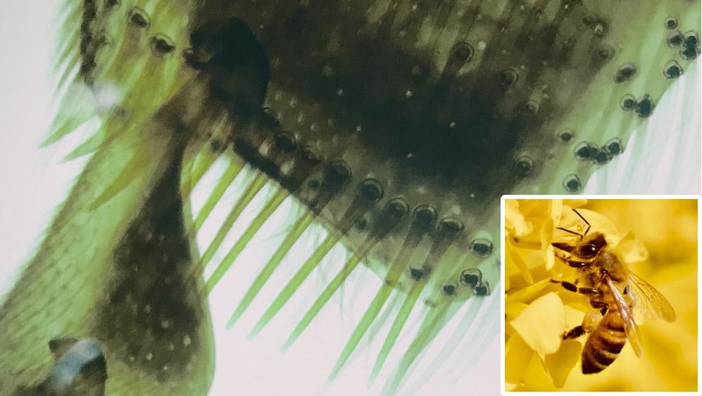 スマホで撮影した顕微鏡写真